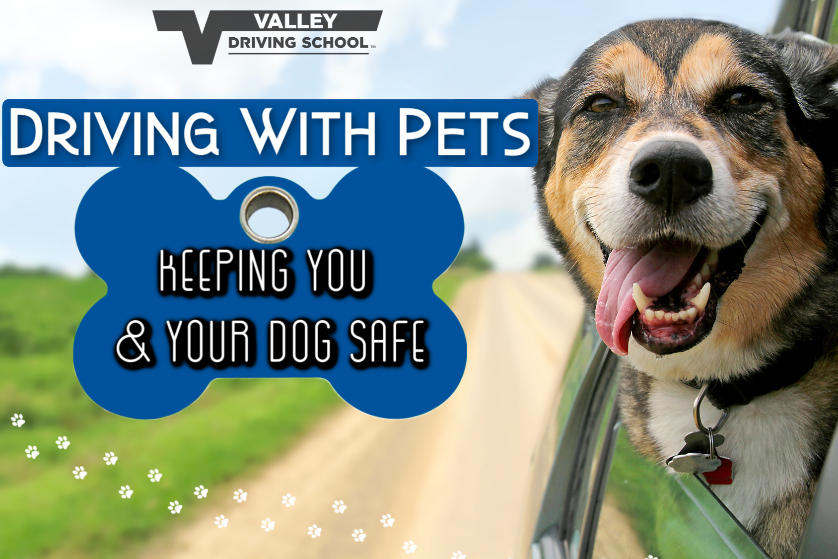 safely drive with your pets